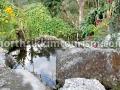 kabi-homestay-garden.jpg